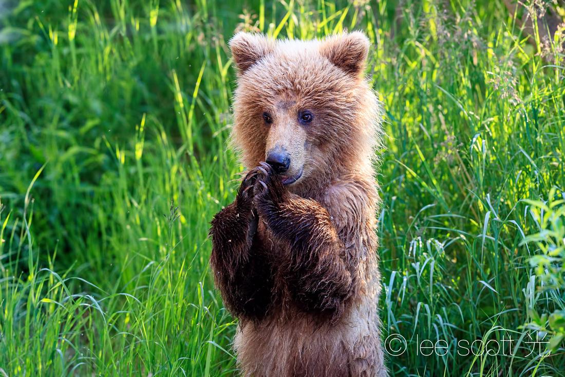 Teddy Bear Be Humble