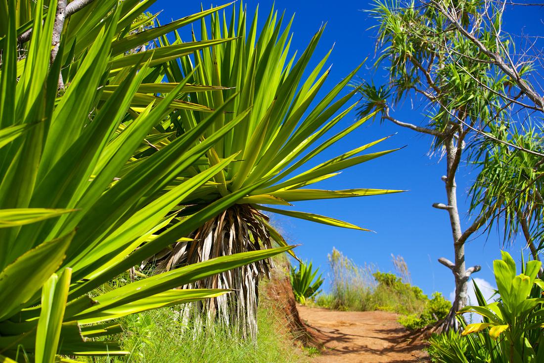 along the kalalau trail